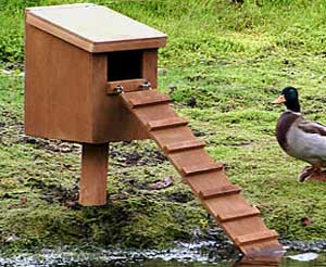 Duck Box Camera System